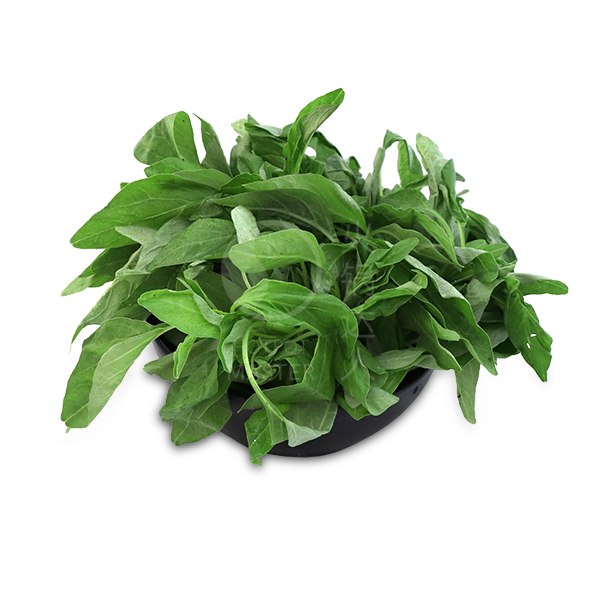Baby Spinach <br> 150g